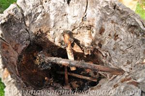 La Hiruela, Interior de una colmena que aún conserva los viros