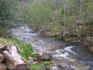 Montejo de la Sierra, Río Jarama a su paso por el Hayedo de Montejo