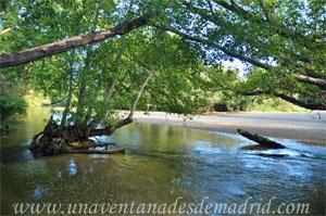 Villa del Prado, Área recreativa de La Poveda. Orilla del Rio Alberche con una de sus playas al fondo.