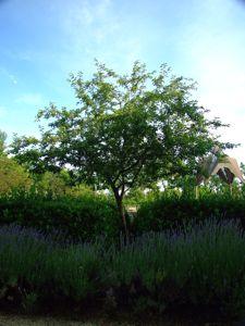 Jardín de las Tres Culturas, Manzano