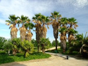 Jardín de las Tres Culturas, Palmeras