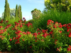 Jardín de las Tres Culturas, Rosa