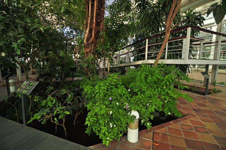 Invernadero de arganzuela for Plantas para invernadero