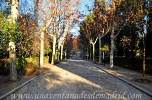 Camino principal de la Quinta de los Molinos