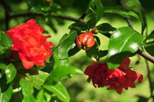 Senda botánica del Retiro número siete, Granada