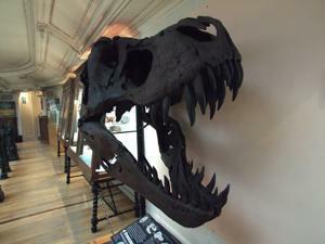 Museo Geominero, Reproducción del cráneo del tiranosaurio de Dakota del Sur