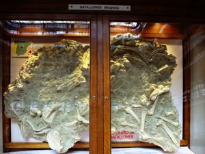 Vitrina del yacimiento paleontológico del Cerro de los Batallones
