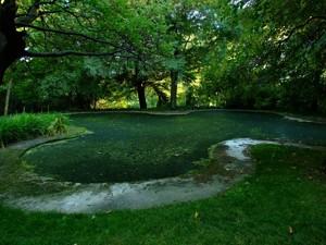 Parque de El Capricho, Estanque de los Cisnes