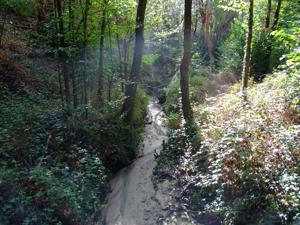 Villaviciosa de Odón, Jardín El Forestal